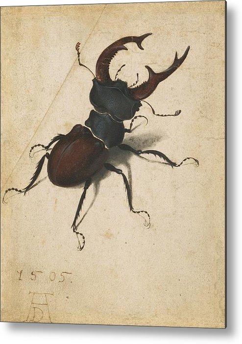 Albrecht Durer Stag Beetle